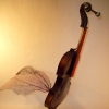 bird_violin_view1